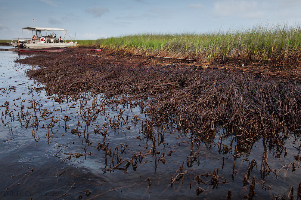 August, 8, 2010,  BP Oil on the surface of the water in Bay Jimmy  and in the marsh where the  BP oil spill had the greatest impact in Plaquemines Parish.