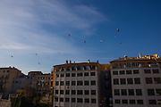 Seagulls flying oer the River Onyar, Girona, Catalonia, Spain