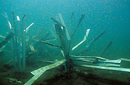 Fish Hiding Structures<br /> <br /> ENGBRETSON UNDERWATER PHOTO