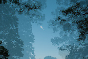 Multiple exposure of moon and tree silouettes, inspired by Japanese-style watercolors.