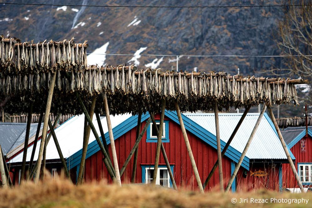 NORWAY LOFOTEN 29MAR07 - Stockfish racks in the traditional fishing village of � on the Lofoten islands...jre/Photo by Jiri Rezac..© Jiri Rezac 2007..Contact: +44 (0) 7050 110 417.Mobile:  +44 (0) 7801 337 683.Office:  +44 (0) 20 8968 9635..Email:   jiri@jirirezac.com.Web:    www.jirirezac.com..© All images Jiri Rezac 2007 - All rights reserved.