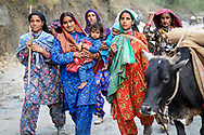 Though they are Muslim, Van Gujjar women never veil their faces - except on their wedding day.