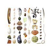Razor Clam (Ensis directus), lobster-claw band, Soft-shell Clam (Mya arenaria), beach stones, sea brick with Northern Rock barnacles (Semibalanus balanoides), Dog Whelk (Nucella lapillus), plastic chain, Blue Mussel (Mytilus edulis), Green Crab (Carcinus maenas), sea coal, Common Slipper Shell (Crepidula fornicata), brick, sea glass, periwinkle encrusted with Coralline ( Littorina sp. and Corallina sp.), Waved Whelk (Buccinum undatum), maple seed (Acer sp.), feather, Tortoise-shell Limpet (Testudinalia testudinalis), lobster-claw band, plastic button, Rockweed (Fucus distichus), ceramic fragment with barnacle, aluminum soda can top, Rock Crab (Cancer irroratus), Green Sea Urchin (Strongylocentrotus drobachiensis), Common Periwinkle (Littorina littorea), shoelace