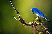 10 essense   birds