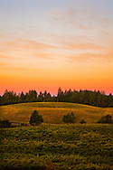 Autumn sunrise over a Howell Mountain vineyard. Napa Valley