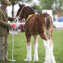 Notts County Show 2013  Shires