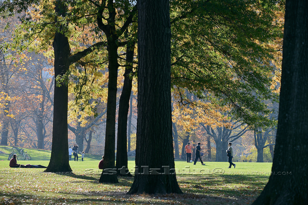 Tree of Sheep Meadow, Central Park, New York City, USA.