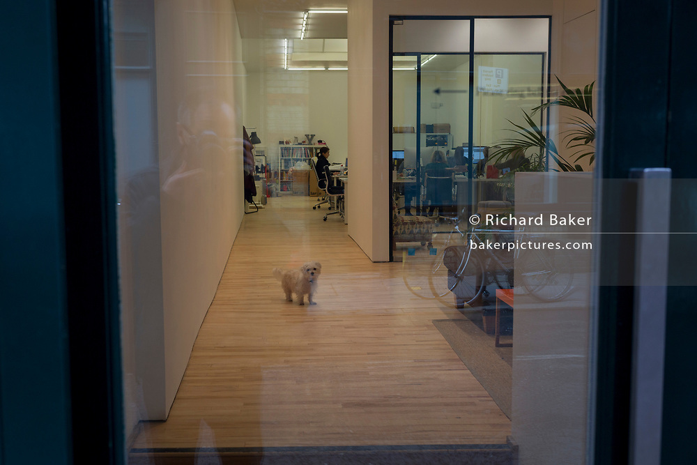 A lonely pet dog stands in the middle of a floor of a small business in Shoreditch, 7th March 2018, in east London England.