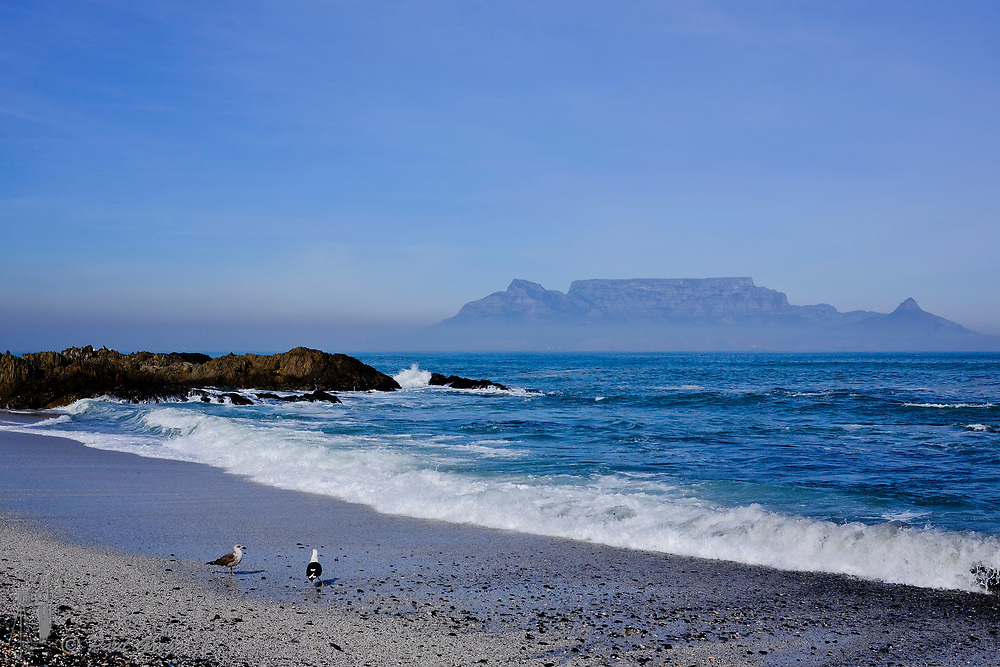 Table Mountain,Cape Town, South Africa. Mussel and other shells litter the beach after heavy seas. A blanket of smog covers the base of Table Mountain in the early winter morning whilst seagulls scavenge along the wave line.