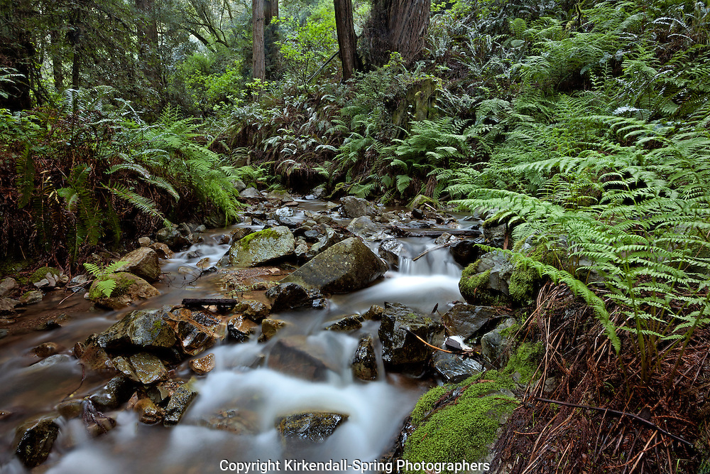 CA02567-00...CALIFORNIA -  Webb Creek viewed from the Steep Ravine Trail in Mount Tamalpais State Park.