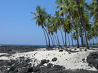 Honaunau Palms on the Big Island, Hawaii