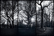 Central Park triptych sunset with bare trees and skyline in winter in black and white, New York, NY, March 2014