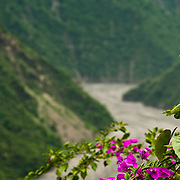 Bougainvillea and River, Sandimen, Pingtung County, Taiwan