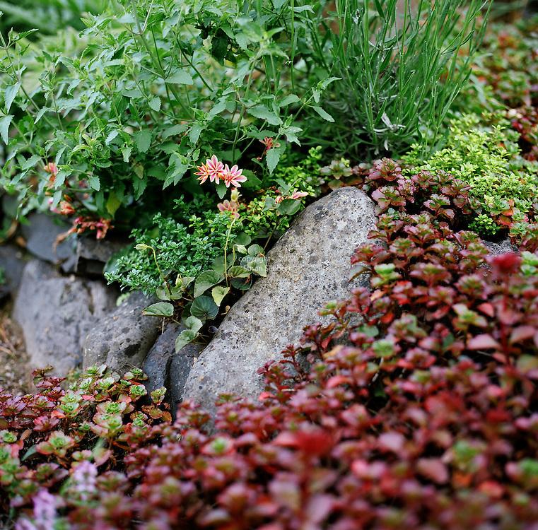The garden of Suzinn Weiss in Portland, OR