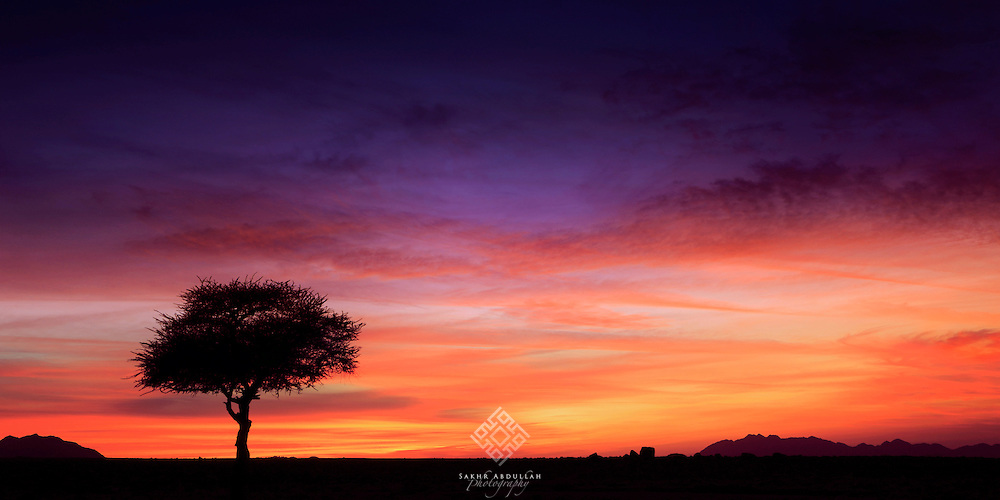 Acacia trees are very common in Flora of Saudi Arabia. This one took my attention with colorful sky at the sunset. This view inspired me for a long story of patience and endurance.