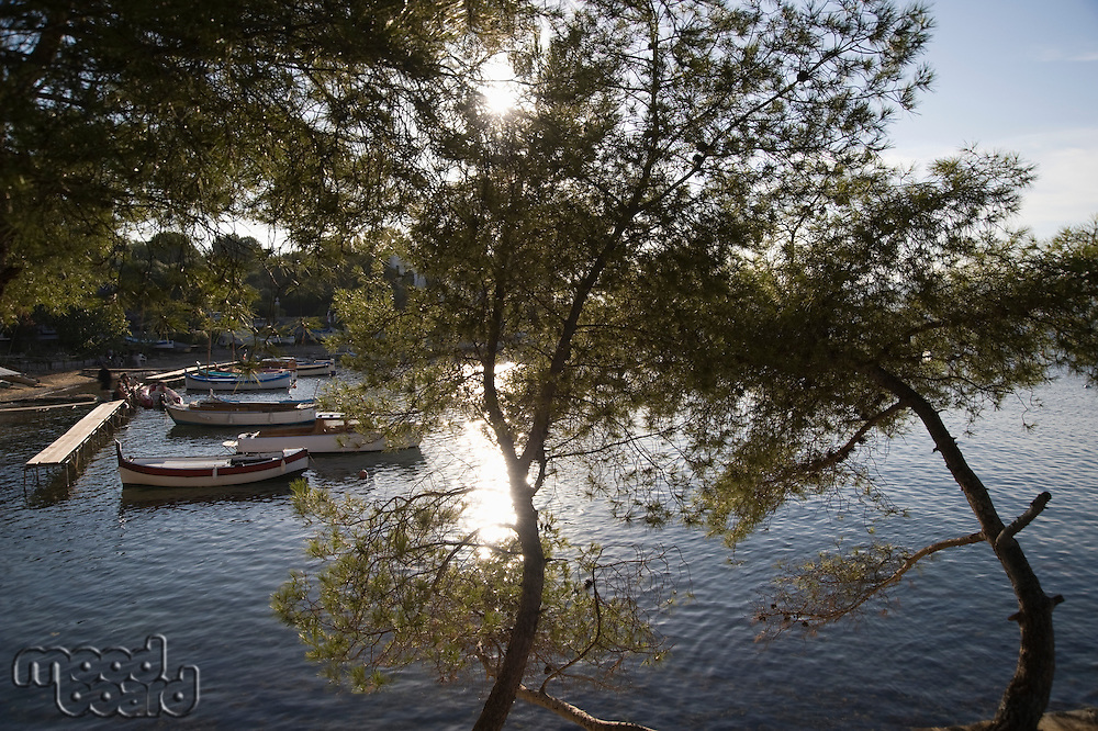 A lake surrounded with trees and a few boats by the jetty with two trees in the foreground