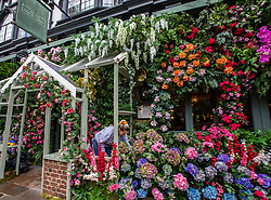 """© Licensed to London News Pictures. 02/07/2020. London, UK. Final touches to the wall of flowers at the Ivy Chelsea Garden restaurant on the King's Road in Chelsea as cafes, restaurants, pubs and hairdressers, get ready for """"Super Saturday"""" after the Prime Minister Boris Johnson gave the go ahead in his statement last week. Photo credit: Alex Lentati/LNP"""