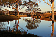 landscape: Australian rural scene of dam surrounded by gum trees and a feeling of tranquility and serenity
