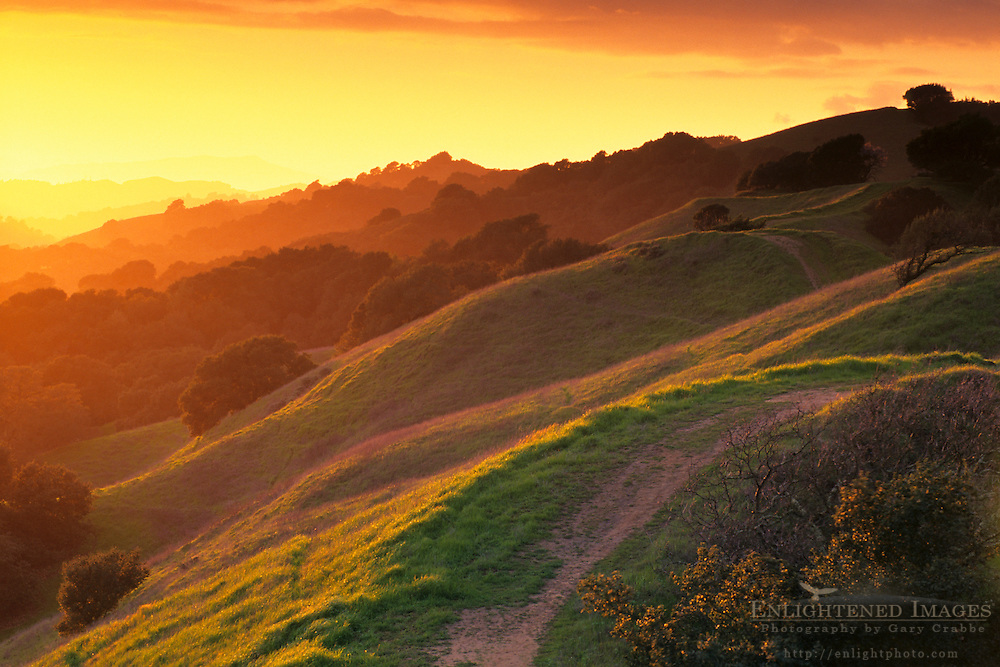 Sunset light on oak covered hills in Briones Regional Park, above Lafayette Contra Costa County, CALIFORNIA