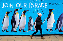 Woman walks past large billboard with penguins advertising Edinburgh Zoo on Princes Street in Edinburgh, Scotland United Kingdom