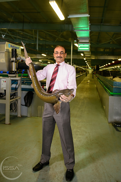 GM / Acting CEO Aqua Orbis holding Siberian sturgeon in Abu Dhabi farm