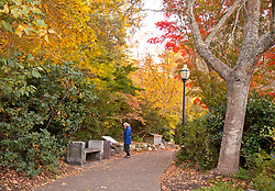Woman in blue coat stops to read signboard, early morning Fall color, Lithia Park, Ashland, Oregon.