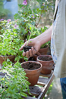 Gardener works in potting shed