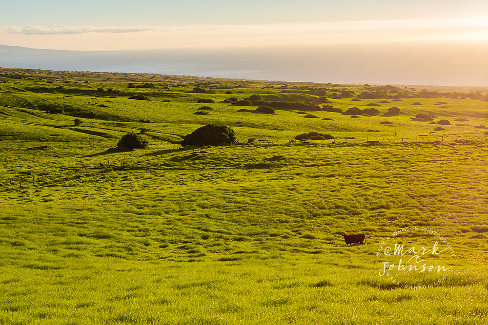 Lush pasture land, Waimea, Big Island, Hawaii