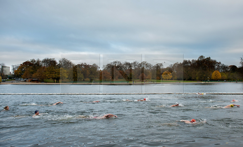 © Licensed to London News Pictures.30/11/2013. London, UK. Members of the Serpentine Swimming Club swim in the cold water of the Serpentine Lake in Hyde Park, London, during the swimming club's winter competition.Photo credit : Peter Kollanyi/LNP