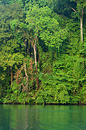 The Costa Rican rain forest rises above the Rio Agujitas near Punta Rio Claro National Wildlife Refuge, Costa Rica.
