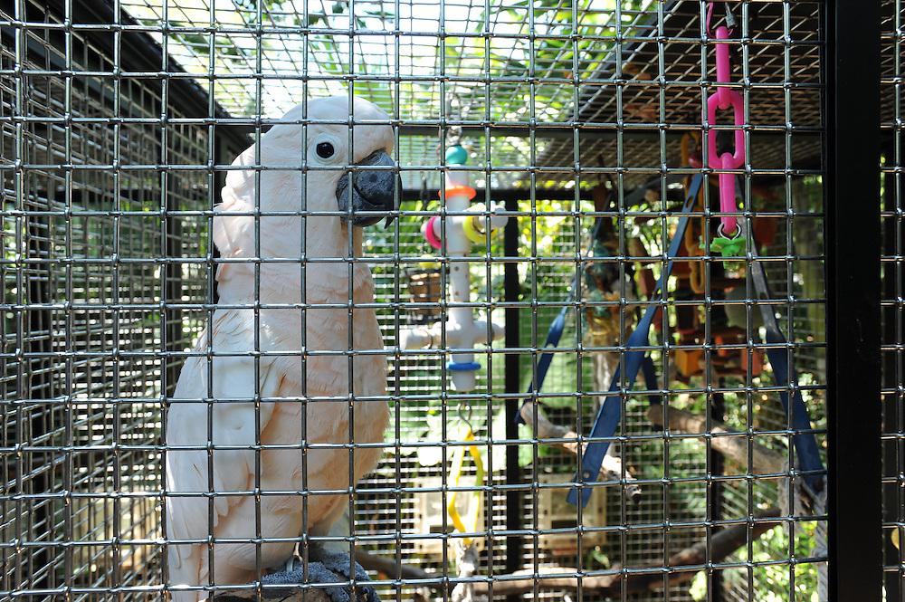 Nancy Forresters Secret Garden . In ihrem regenwaldartigen Garten bietet die Kuenstlerin nebst einer Gallerie ua. alten und ausgestossenen Papageien ein Zuhause..Florida 2009..Foto © Stefan Falke.