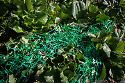 Green construction netting merges with the colours of plants and shrubs on the Southbank, on 12th September 2017, in London, England.