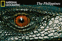 Eye of a Panay monitor lizard, Varanus mabitang.  A new species discovered in Panay Island, Philippines in 2001.<br /><br />IUCN Red List: Endangered<br /> only found in remnant forest on Panay.