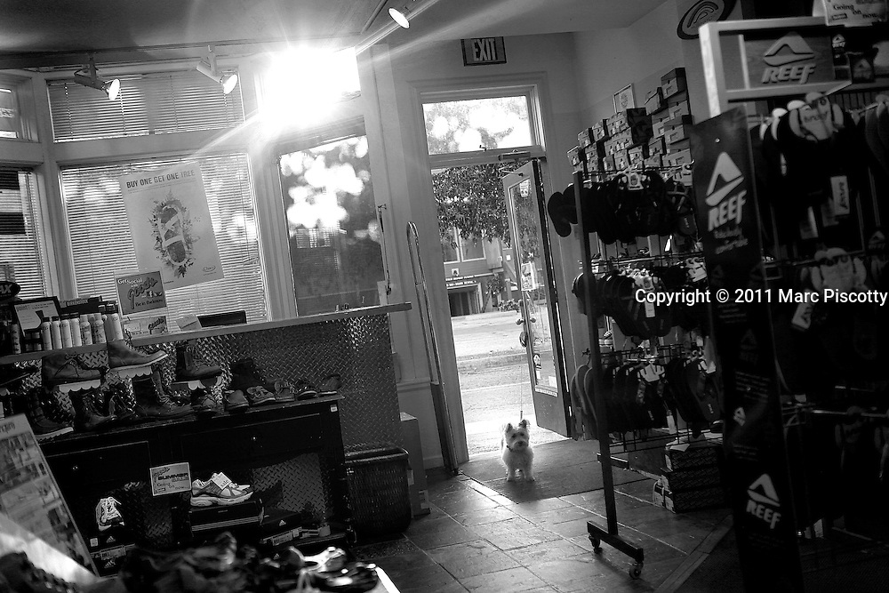 SHOT 8/16/11 6:49:51 PM - A small dog waits for its owner as they shop at Goods Breckenridge one afternoon in Breckenridge, Co. Established in 1859, the historic town of Breckenridge is a home rule municipality that is the county seat of Summit County, Colorado, United States. As of the 2010 Census, the town had a population of 4,540. The town also has many part-time residents, as many people have vacation homes in the area. Breckenridge is also a popular ski resort during the winter months and summer in Breckenridge attracts outdoor enthusiasts with hiking trails, wildflowers, fly-fishing in the Blue River and mountain biking. (Photo by Marc Piscotty / © 2011)