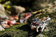 Dead Salmon (Family Salmonidae), Canada