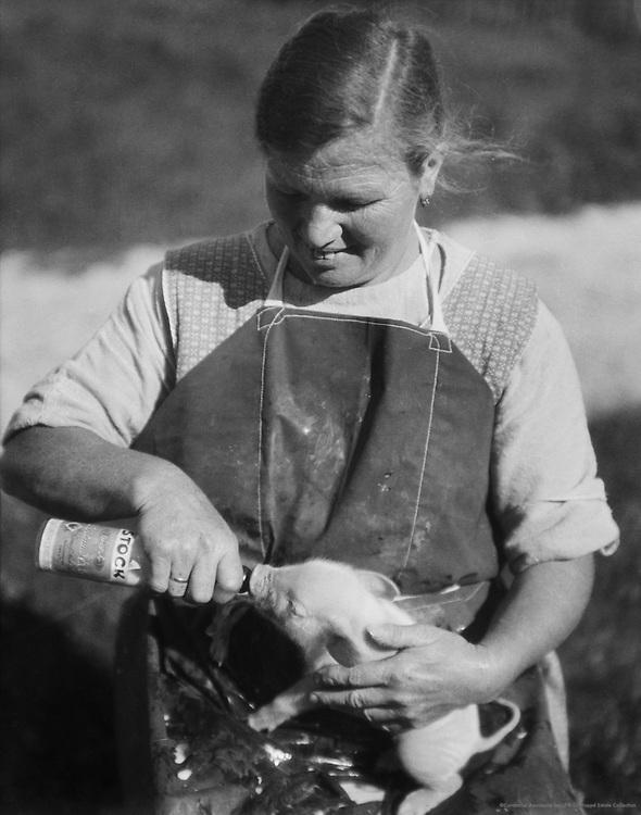 Woman feeding baby pig, Molln, Austria, 1924