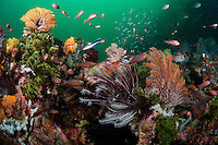 Healthy Reef with Crinoids, Soft and Hard Corals and Reef Fish