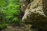 Kaskaskia Canyon, Starved Rock State Park, LaSalle County, Illinois