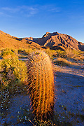 Morning light on cholla and barrel cactus under Indianhead Peak, Anza-Borrego Desert State Park, California USA