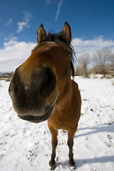 Close up of a horse in the snow outside of Taos, NM<br />