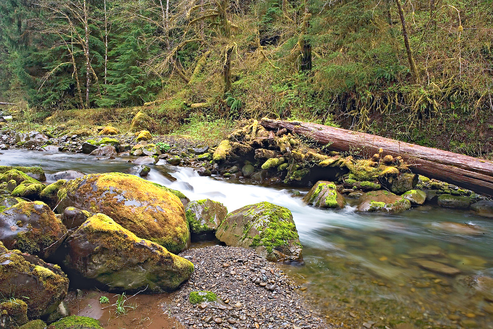 small waterfall on Owl Creek Hoh Rainforest Washington State
