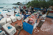 Fish market at Puerto Ayora on Santa Cruz island, part of the Galapagos islands of Ecuador.