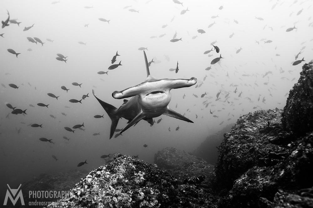 Cocos Island, Dive Spot: Manuelita Out
