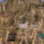 Fluminense fans support their team during the Fluminense FC V CR Vasco da Gama Futebol Brasileirao League match at the Maracana, Jornalista Mário Filho Stadium, Rio de Janeiro,  Brazil. 22nd August 2010. Photo Tim Clayton.