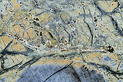 Mylonitized peridotite (grey) that has undergone serpentinization (green), followed by carbonate formation (white veins) and seafloor weathering (light brown). Central equatorial Atlantic Ocean, Saint Peter and Saint Paul Archipelago, Brazil #STP17 [first published through bioGraphic, a program of the California Academy of Sciences] |