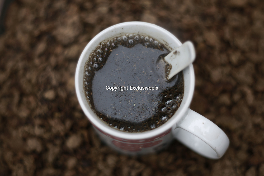 XIANGTAN, CHINA - OCTOBER 29: (CHINA OUT)<br /> <br /> Drinking Faeces Of Cow And Sheep To Treat Cancer<br /> <br /> A cup of water given powder of faeces is seen at Jinshi village on October 29, 2014 in Xiangtan, Hunan province of China. Over 20 families in Jinshi village prevent and treat disease by drinking water of faeces from cows and sheep because a local elder woman said that faeces of cow and sheep through drying, toasting, grinding and then giving water to drink can prevent and treat disease and her cancer got better after drinking for eight months.<br /> ©Exclusivepix