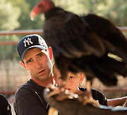 Melissa Moore, Executive Director of the New Mexico Wildlife Center in Espanola, brought some raptors to PEEC for Summer Family Evening July 19, 2017. Joining here at PEEC were Sienna, a Red-Tailed Hawk; a Turkey Vulture named Sol; and a Great Horned Owl named Oscar. They found out later that Oscar was actually femaile, but by then they didn't want to change her name. All images ©2017 Thomas Graves