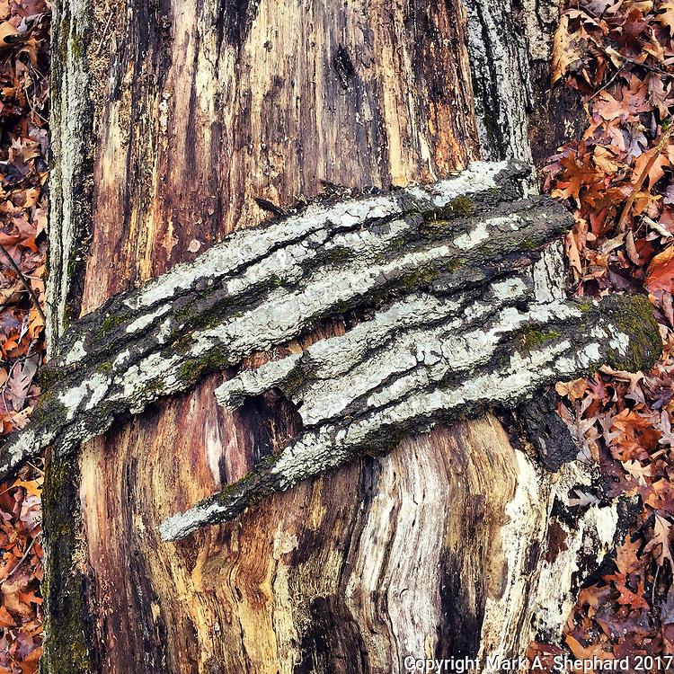 West Virginia Botanic Garden - January 2017 (iPhone 6 Plus photo by Mark A. Shephard)