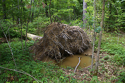 Freshwater Lake Environment