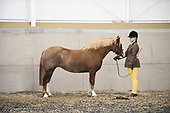 Class 07 - Inhand Veteran Horse & Pony 15yrs+
